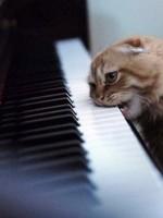 Шестнадцать интереснейших фактов о фортепиано